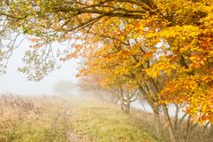 Misty countryside Royalty Free Stock Photo