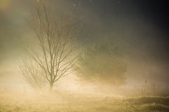 Misty countryside morning Stock Photography