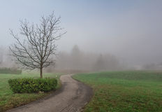 Misty countryside-r. Tree silhouette with road in a misty countryside royalty free stock photos