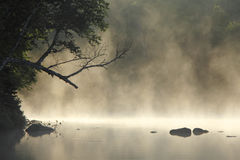 Misty Cove Royalty Free Stock Photo