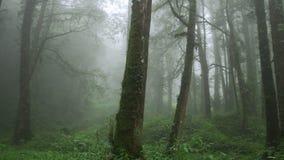 Misty Cypress Forest dans la r?gion sc?nique d'Alishan avec le brouillard et la brume ? Ta?wan banque de vidéos