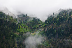 Misty dark forest Royalty Free Stock Image