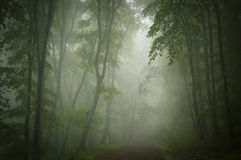 Misty dark green woods with path Royalty Free Stock Photography