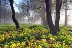 Misty dawn. At the edge of the forest in spring Stock Photography