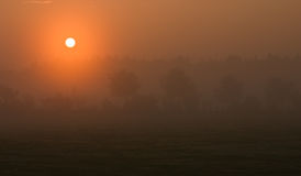 Misty dawn. Over a meadow, outlines of trees visible in the distance Royalty Free Stock Photo