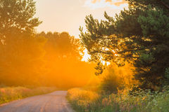 Free Misty Dawn Stock Images - 59868464