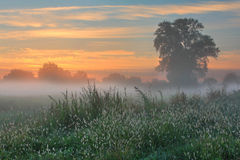 Misty dawn autumn morning Royalty Free Stock Photo