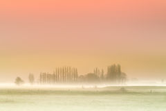Misty dawn background Stock Image