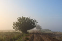 Misty dawn early morning nature grassland landscape Stock Photos