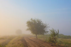 Misty dawn early morning nature grassland landscape Royalty Free Stock Photography