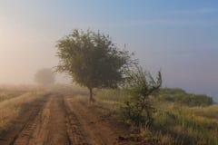 Misty dawn early morning nature grassland landscape Royalty Free Stock Image