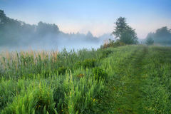 Misty dawn at the lake. In a spring morning Royalty Free Stock Photography