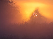 Misty dawn Royalty Free Stock Images