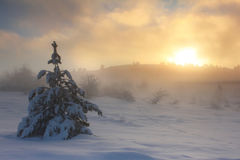 Misty dawn in the mountains. Spruce in the snow against dawn sky in the mountains Stock Image