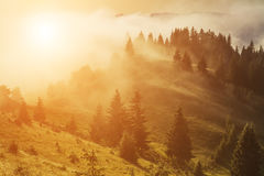 Misty dawn in the mountains in summer Stock Images