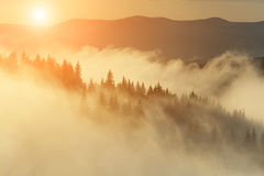 Misty dawn in the mountains in summer Stock Photos