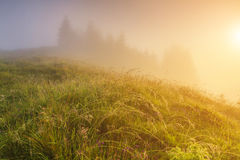 Misty dawn in the mountains in summer Royalty Free Stock Photography