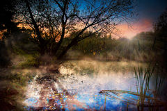 Misty dawn over Lake Forest. Mist over forest lake Stock Images