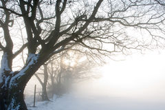 Misty Dawn over Snowy Field Royalty Free Stock Photography