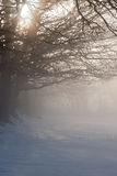 Misty Dawn over Snowy Field Stock Photo