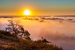 Misty dawn over Valley and the forest Stock Images