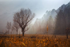 Misty dawn over wooded mountains Stock Images
