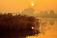Misty Dawn of reeds on the lake. Stock Photo
