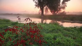 Misty dawn on the river. In the fall stock video
