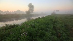 Misty dawn on the river. In the fall stock video footage