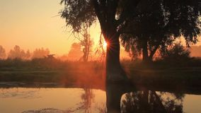 Misty dawn on the river. In the fall stock footage