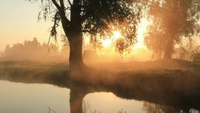 Misty dawn on the river with the first sunrays. stock footage