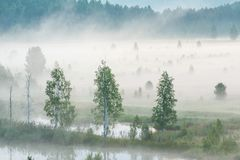 Misty dawn on the river. Heavy fog royalty free stock images