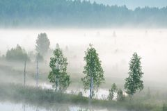 Misty dawn on the river. Heavy fog royalty free stock image