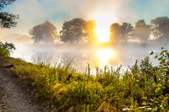 Misty dawn and silhouettes of the trees by a river Stock Photography