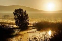 Misty dawn Royalty Free Stock Photo