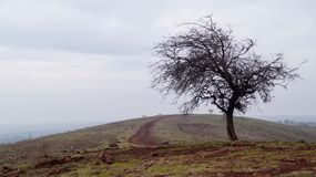 Misty day in the Golan Heights Israel royalty free stock photography
