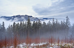 Misty day in Harz mountains Royalty Free Stock Photo