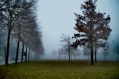 Misty day in the morning royalty free stock images