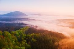 Misty daybreak in a beautiful hills. Peaks of hills are sticking out from foggy background, the fog is yellow and orange due to su Royalty Free Stock Photo