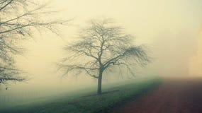Misty days stock image