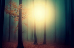 Misty days stock images