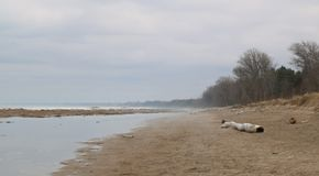 Quiet spring beach in the fog with snow and ice still melting royalty free stock photos