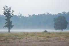 Misty Dew Rising outre de Forest Floor photos libres de droits