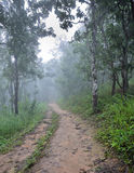 Misty dipterocarp forest. Hiking trail through a misty dipterocarp forest, Thailand Stock Photography