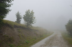 Misty Dirt Road: Fundo místico da natureza imagens de stock royalty free