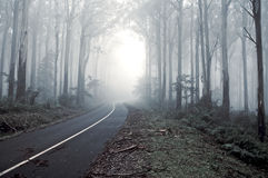 Misty drive thought the forrest. A road leading into the misty forrest, journey road Royalty Free Stock Photo