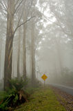 Misty drive thought the forrest with sign. A road leading into the misty forrest, gravel road sign Royalty Free Stock Photo