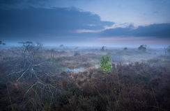 Misty dusk on marshes Royalty Free Stock Photography