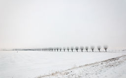 Misty Dutch landscape with a row of willows Royalty Free Stock Photography