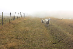 Misty England Arkivbild
